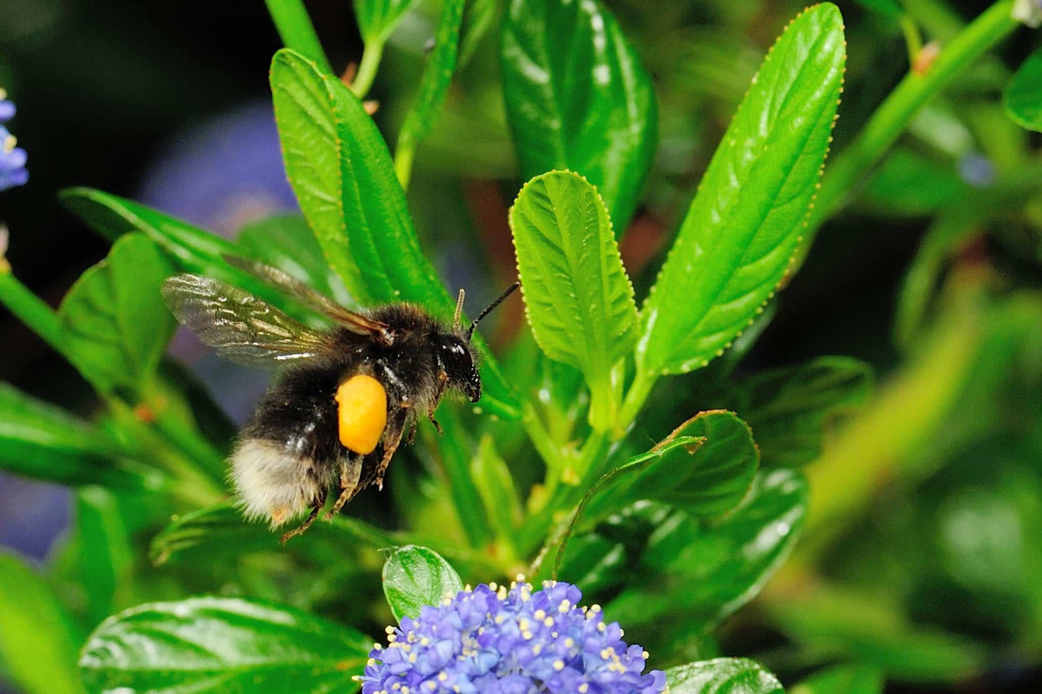 Comment photographier des insectes en plein vol , régler la sensibilité ISO