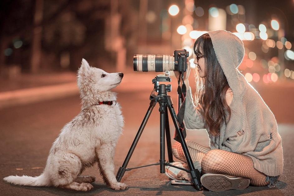Les astuces pour photographier un chien ou un chat